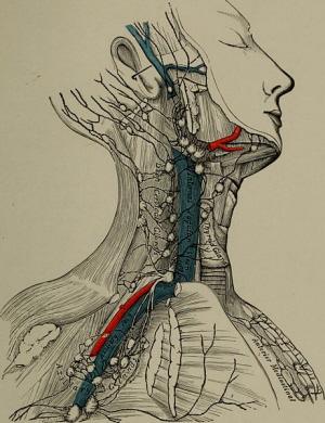 fisioterapia - linfodrenaggio